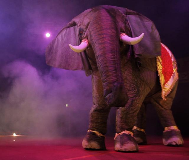 Eeshathe preforming elephant (10)