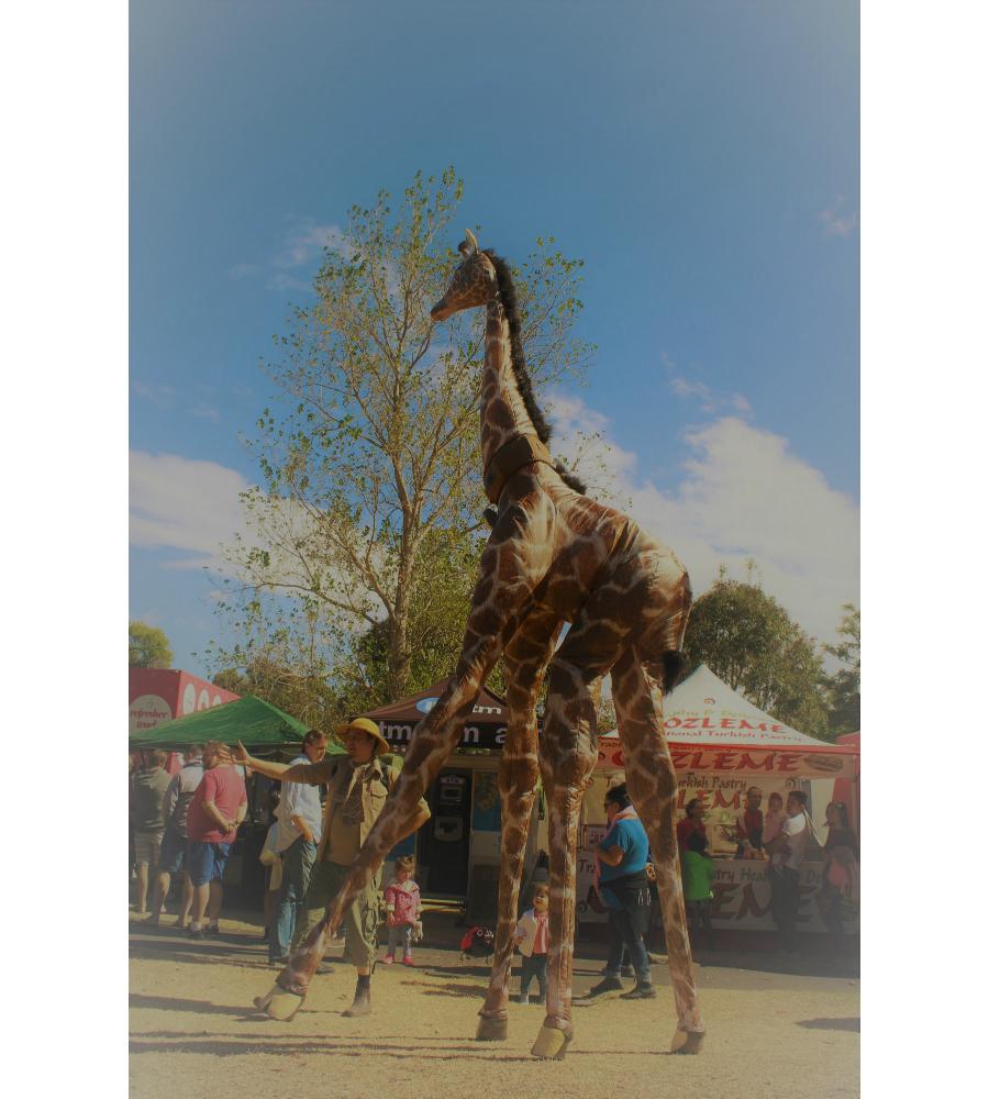 Gemma Giraffe Stilt Walkers Australia _soliq 2