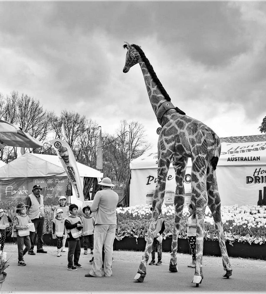 Gemma Giraffe_B&W_Stilt Walkers Australia