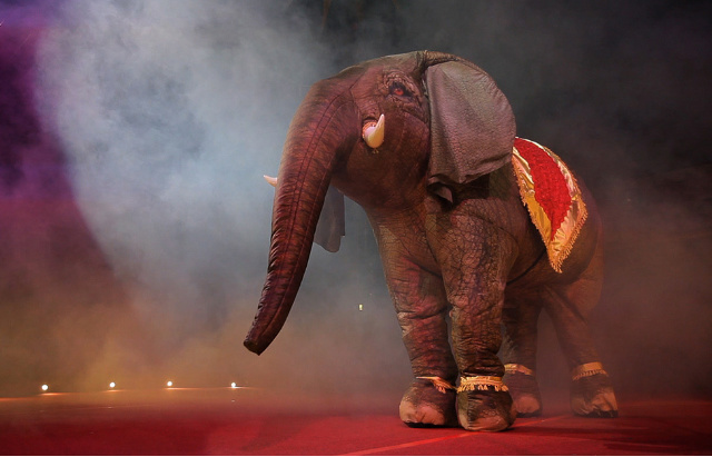 entertainer eesha elephant